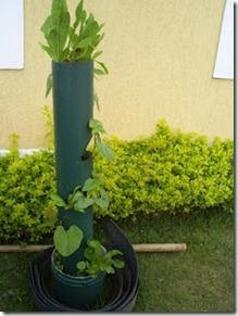 horta vertical na casa da Amanda