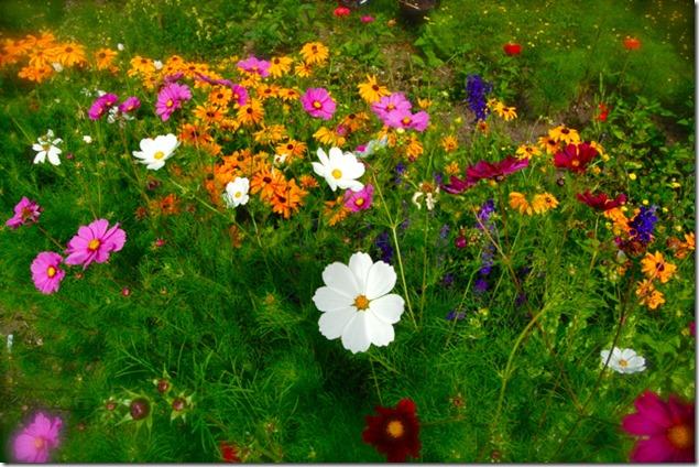 cut-flower-seeds