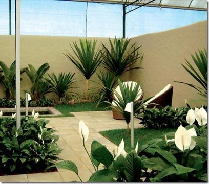 Fotos-de--Plantas-E-Jardins_fortaleza-olx-com-br