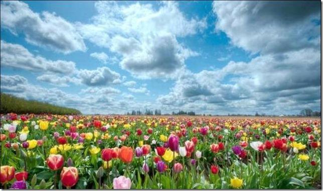 Flowers Garden (21)