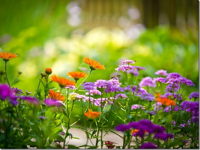 Nature-Multicolor-Flowers-Garden-Summer-Season-Bees-Depth-Of-Field-768x1024