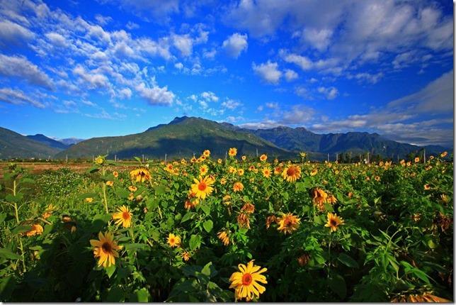 林辰儒-太陽花之美