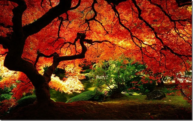 tree-autumn-leaf-park-garden-nature