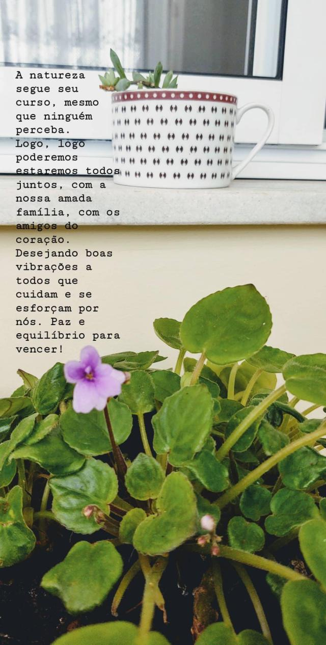 Plantas_95042020-JarcyTania